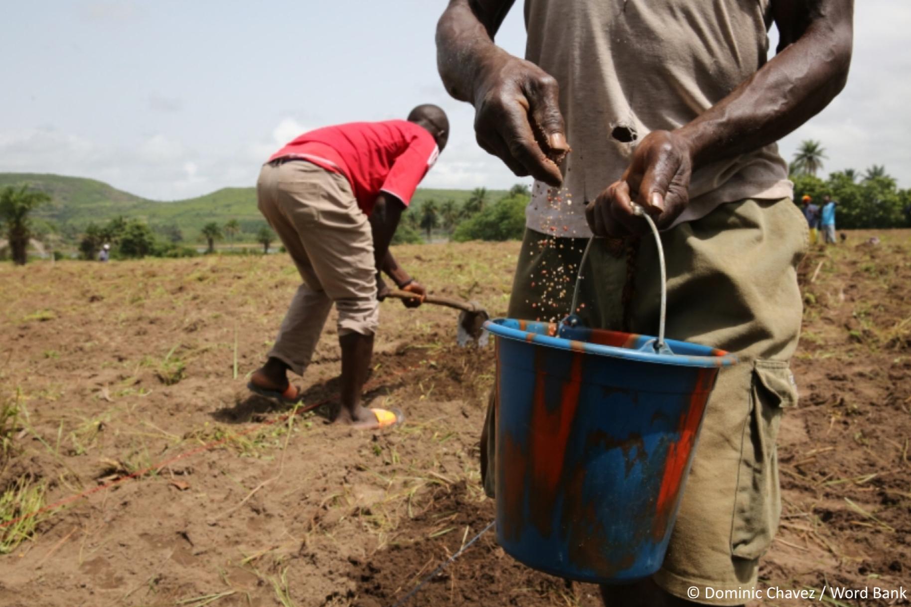 Le Covid-19 en Afrique de l'Ouest, quel impact sur l'inclusion financière?