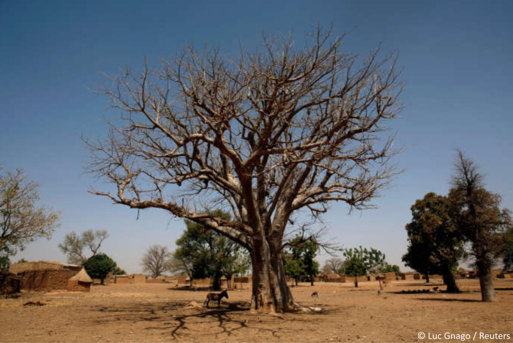 SOS Sahel lance la plateforme des partenaires pour valoriser la contribution des acteurs non étatiques à la réalisation de la Grande Muraille Verte