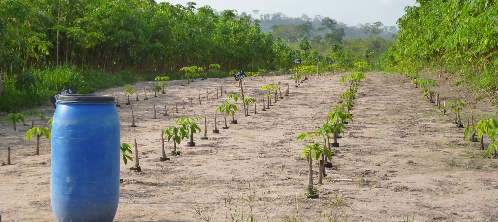 Agroécologie, une voie d'adaptation au changement climatique avec le FFEM.