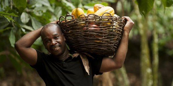 Le commerce équitable en Afrique de l'ouest avec le PFCE et AVSF.