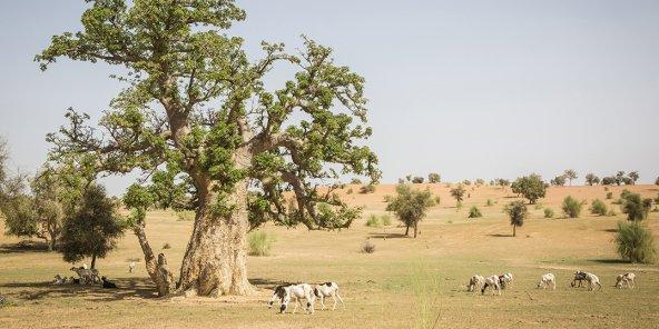 Ibrahim Thiaw – Au Sahel, la Grande Muraille verte est plus nécessaire que jamais