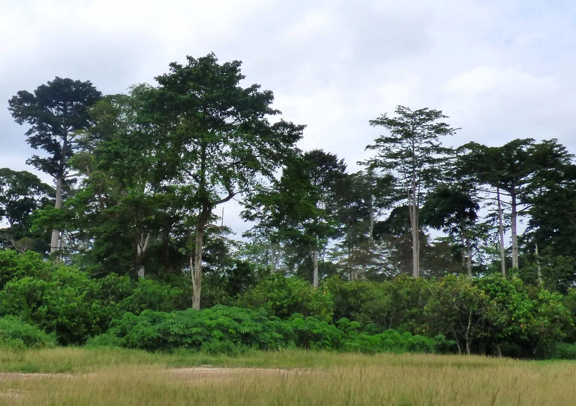 Lancement de nos Policy Brief: les Nit'IDEAs – 1er numéro sur les transitions agroforestières en cacaoculture