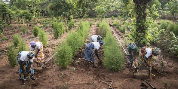 CIRAD – Après le sommet Afrique-France, investir ensemble dans l'agroécologie